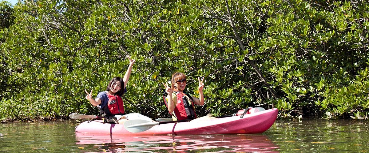 西表島マングローブの森カヌーと由布島